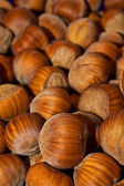 Wood nuts - a filbert — Stock Photo