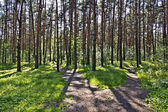 Footpath in the wood — Stock Photo