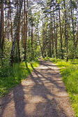 Summer day in the wood — Stock Photo