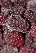 多汁的黑莓手机 — 图库照片