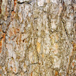Pine bark — Stock Photo
