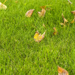 Grass and autumn leaves — Stock Photo