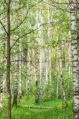 Journée ensoleillée d'été dans le bois — Photo