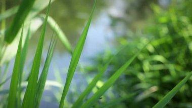 La hierba contra el río — Vídeo de stock