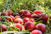 Manzanas chinas sobre la hierba — Foto de Stock