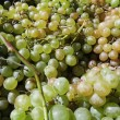 White Grapes — Stock fotografie #28614963