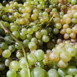 Foto Stock: White Grapes
