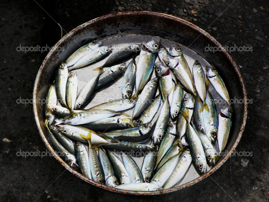 Dead small silvery fish in a bucket stock photo keem for Bucket of fish
