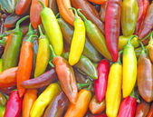 Chilies in Many Different Colors and Shades — Fotografia Stock