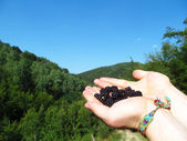 Hands holding Blackberries with Hills in the Background — Stock Photo
