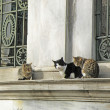 Three Cats Sitting on the Wall of an Islamic Cemetery — Stock Photo