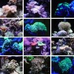Corals. The inhabitants of the underwater world. — Stock Photo #23548795