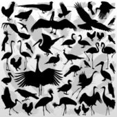 Big and small birds detailed illustration collection background — Stock Vector