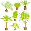 House plants vector background - Stok Vektör