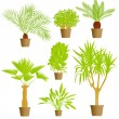 House plants vector background - Stock Vector