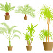House plants vector background — Stock Vector #13765201