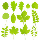 Leaves set of trees isolated on white — Stock Vector