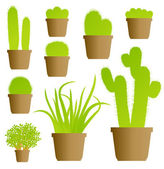 Cactus house plant set vector background — Stock Vector