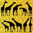 Giraffe detailed silhouettes illustration collection — Stock Vector #14787253