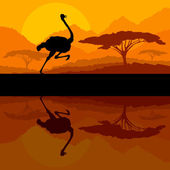 Running ostrich bird in wild mountain nature landscape backgroun — Stock Vector
