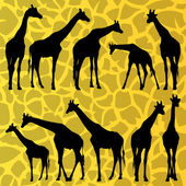 Giraffe detailed silhouettes illustration collection — Stock Vector