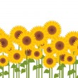 Yellow sunflowers - Stock Vector