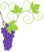 Grape vector background ecology — Stockvektor