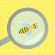 Bees hive and wax honeycomb under magnifier glass inspection ill — Stock Vector