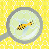 Bees hive and wax honeycomb under magnifier glass inspection ill — Stockvector