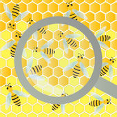 Bees hive and wax honeycomb under magnifier glass inspection ill — Vector de stock