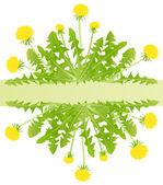 Dandelion flower vector background card — Stock Vector