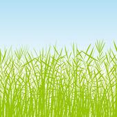 Pasto, caña y plantas silvestres siluetas detallada ilustración ba — Vector de stock