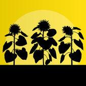 Concept de fond vecteur champ de tournesols paysage — Vecteur