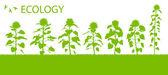 Slunečnice vektorové pozadí ekologie koncept — Stock vektor
