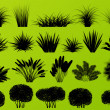 Exotic jungle bushes grass, reed, palm tree wild plants collecti — Vettoriali Stock