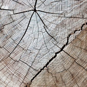 Cut of a tree wooden rings with cracks — Stock Photo
