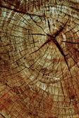 Corte de un árbol, un año comunidad — Foto de Stock