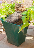Cat in a plant pot — Stock Photo