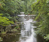 River Derwent — Stock Photo