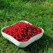 Red currant in a bowl — Stock fotografie