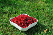 Red currant in a bowl — Stock Photo