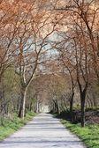 森林を通って方法 — ストック写真