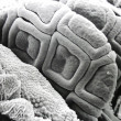 Stock Photo: Microscopic life