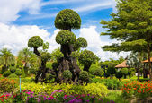 Beautiful trees in the botanical garden — Stock Photo