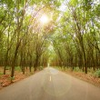 Stock Photo: Rubber tree tunnel on the road