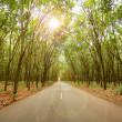Rubber tree tunnel on the road — Stock Photo