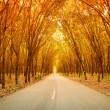 Stock Photo: Rubber tree tunnel on road