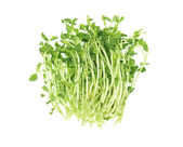 Fresh Pea Sprouts — Stock Photo