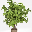3D Houseplant — Stock Photo