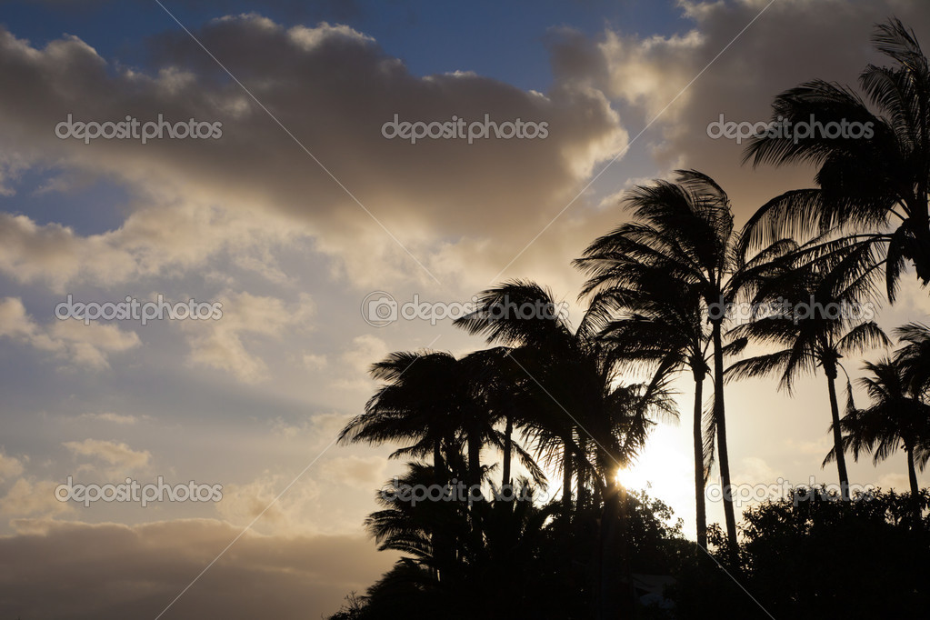 View at palms during sunset  Stock Photo #12036881